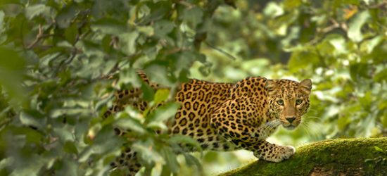 Experience the real escapade of Tadoba Wildlife Safari in India