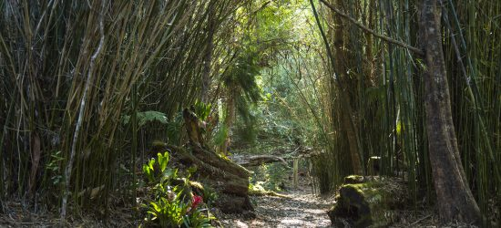 Kona Cloud Forest – Guided Walking Tours