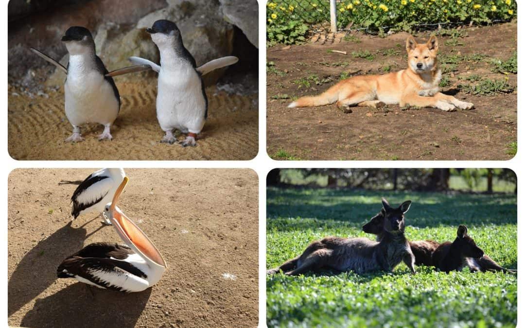 Kangaroo Island Wildlife Park | Attraction South | Australia