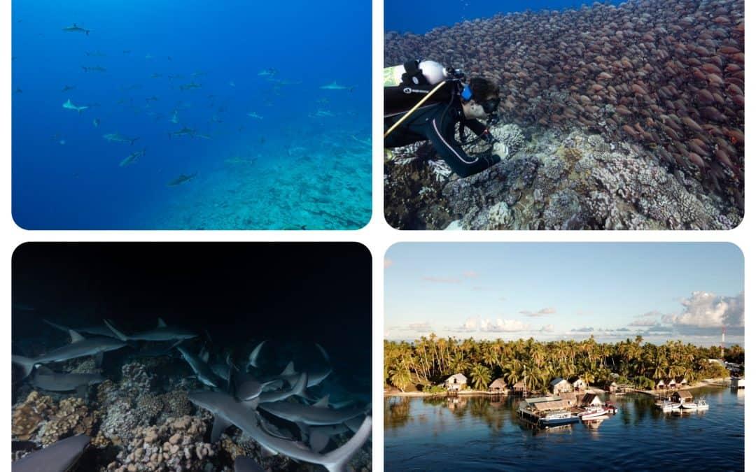 TETAMANU DIVING CENTER | Diving Company | French Polynesia