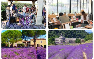 Lavender Museum Luberon | Cultural Experience | France