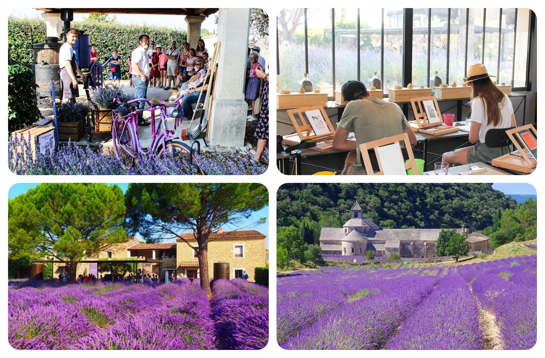 Lavender Museum Luberon