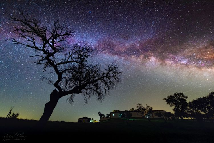 Milkyway behind tree