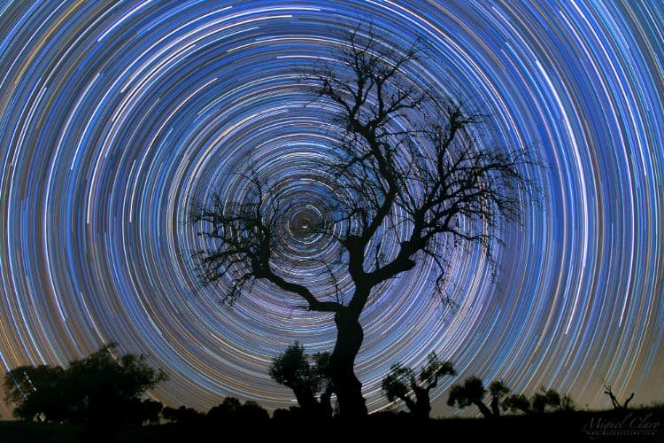 Startrails behind a tree