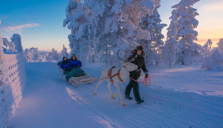 Reindeer sledge ride